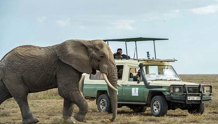 tinga_tinga_safaris