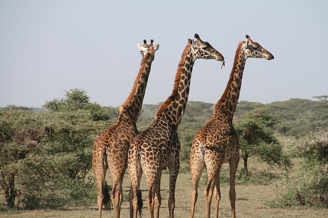 unique safari honeymoon