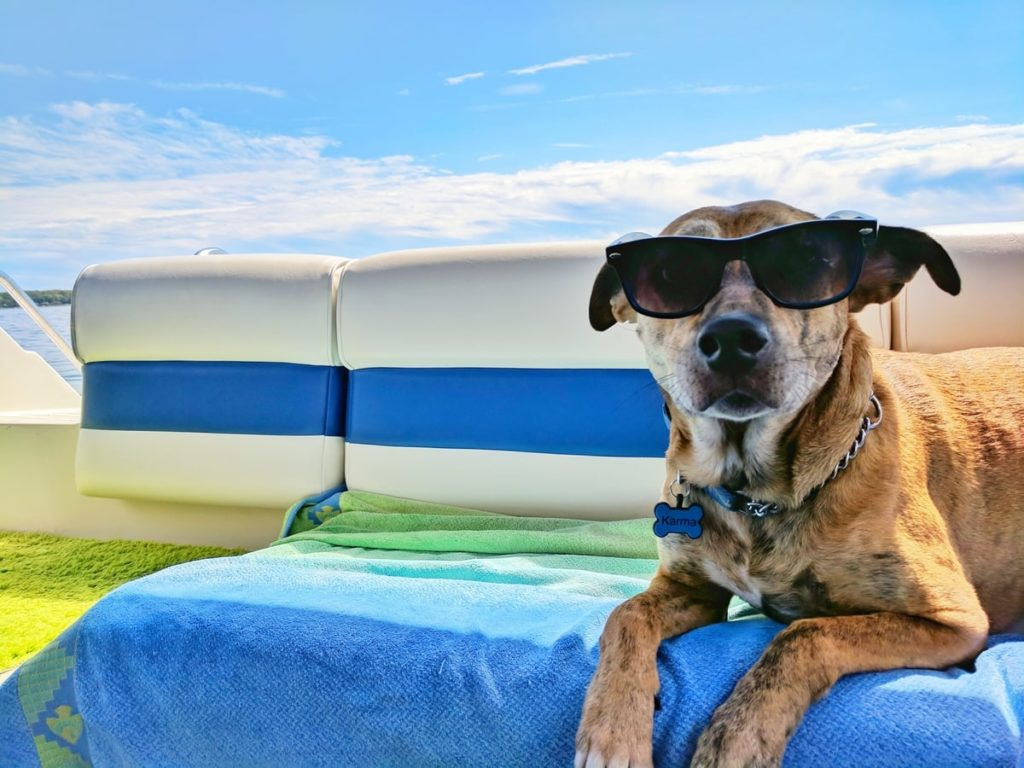 dog-chill-sunglasses-cool-relaxed