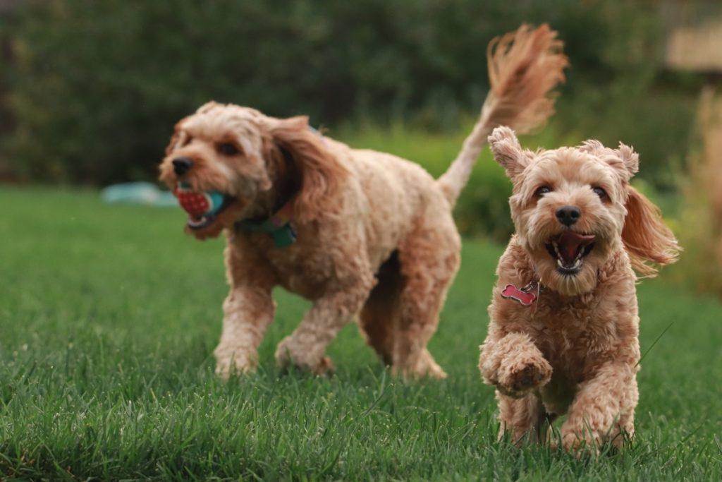 dogs-playing-ball-fun-joy.jpg