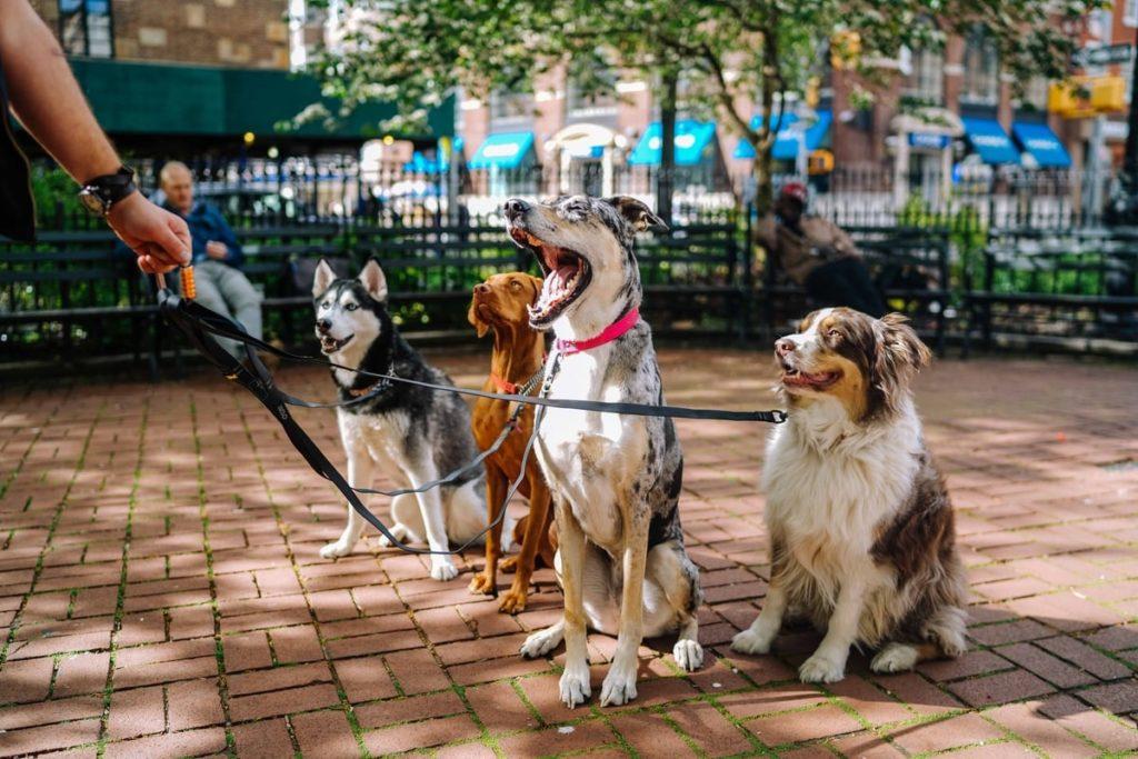 dogs-sitting-walker-leashes-dogsitter.jpg