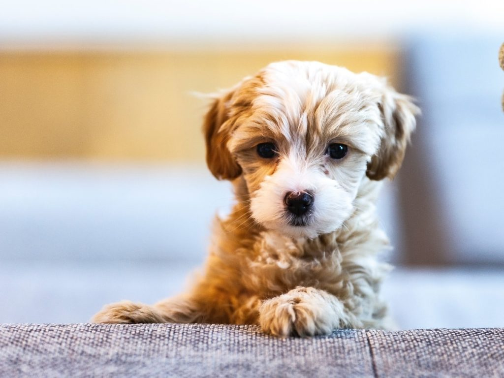 puppy-cute-lying-down-sad